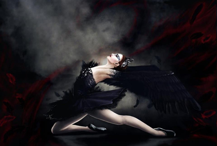Misunderstood yet again, New York's swan population faces an an uncertain future. Image depicting Black Swan.