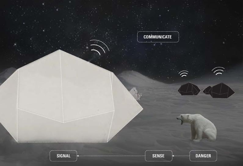 Image from Dagmara Nowak's Arctic Circle Thesis Proposal.