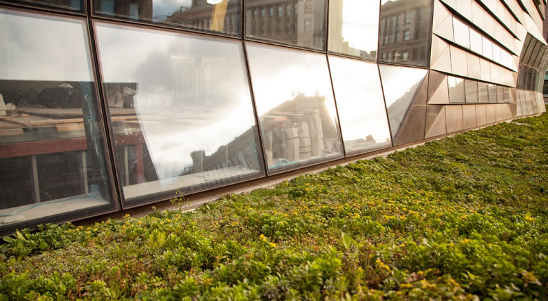 The University Center Green Roof.