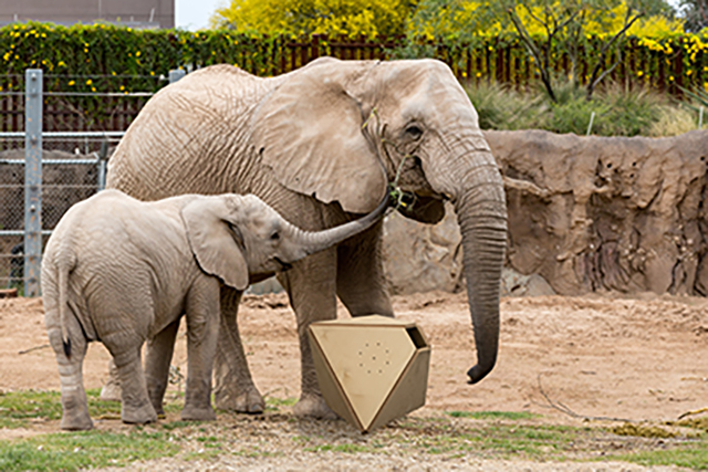 Student prototype rendering of music box designed for zoo elephants